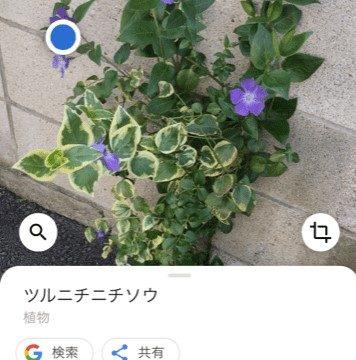 Googleレンズ植物調べる